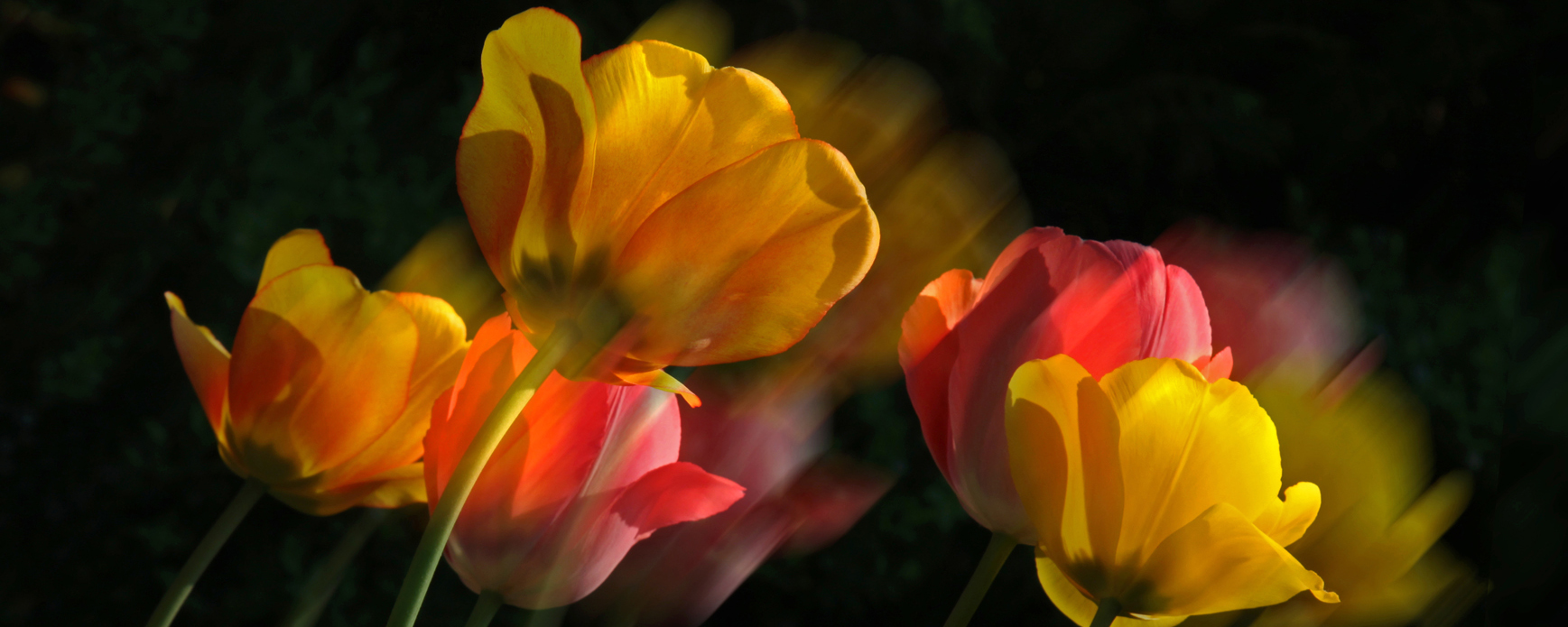 Permalink auf:Hedda Franke-Hölscher